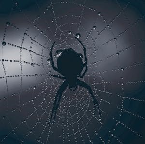 /b/s/r/SpiderWeb.jpg