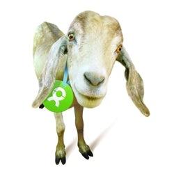 /i/m/t/goat250.jpg