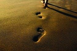 /i/b/k/footprints250.jpg