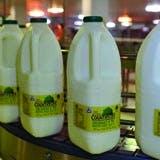 /s/g/b/milkbottles.jpg