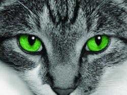 /a/n/f/cat250.jpg