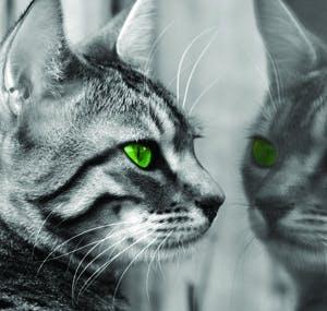 /u/i/i/cat300.jpg