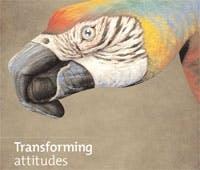 /v/j/s/parrots.jpg