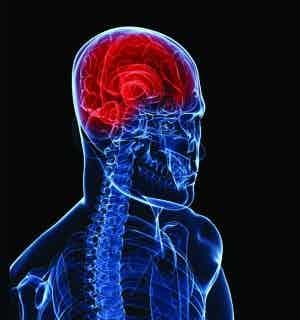 /i/w/a/brainbody300.jpg