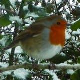 /r/e/g/Robin.jpg