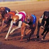 /s/i/f/Greyhounds.jpg