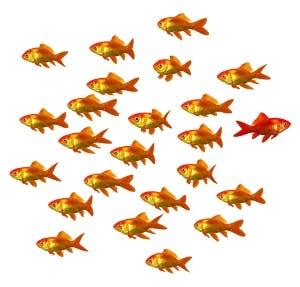 /i/f/p/fish300.jpg