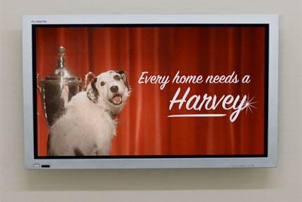 Harvey The Dog