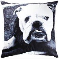 /e/g/p/cushion.jpg