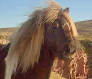 Three Pony ad
