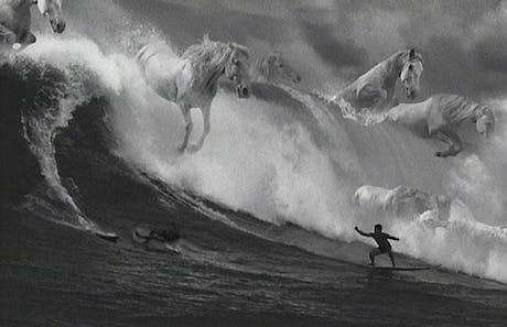 Guinness Surfer Horses