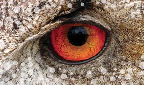 eye-2013-460