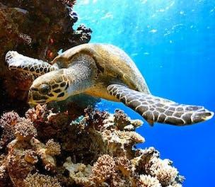 Weather Channel Turtle Brink