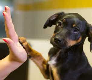 dogs-trust-paws-2013-304