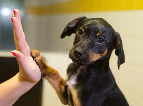 dogs-trust-paws-2013-460.jpeg