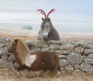 Three Christmas Pony