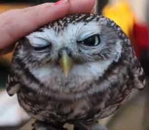 Waterstones OWLS
