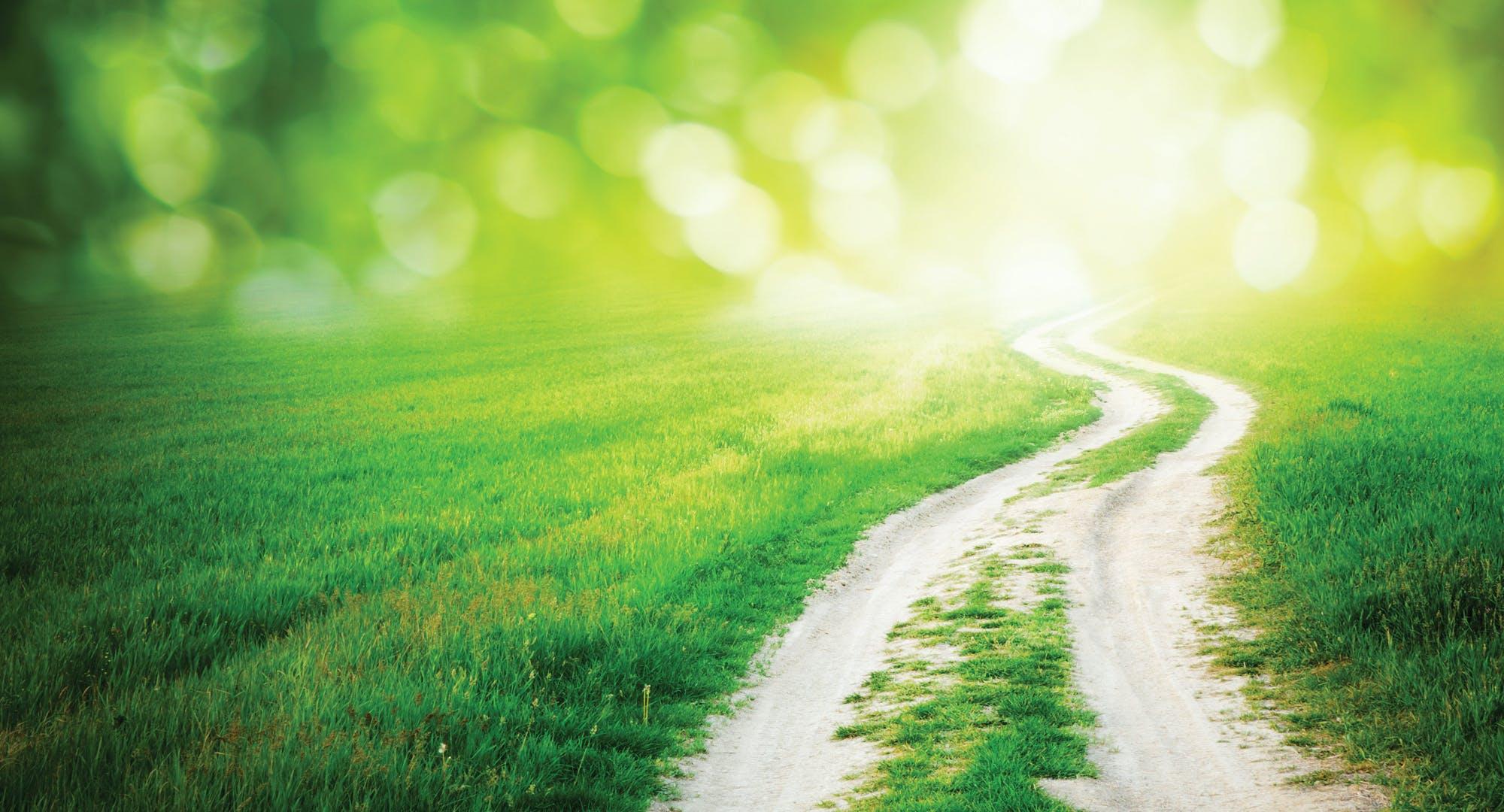 sideways-path-2014-fullwidth