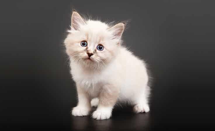 Fluffy and weak kitten