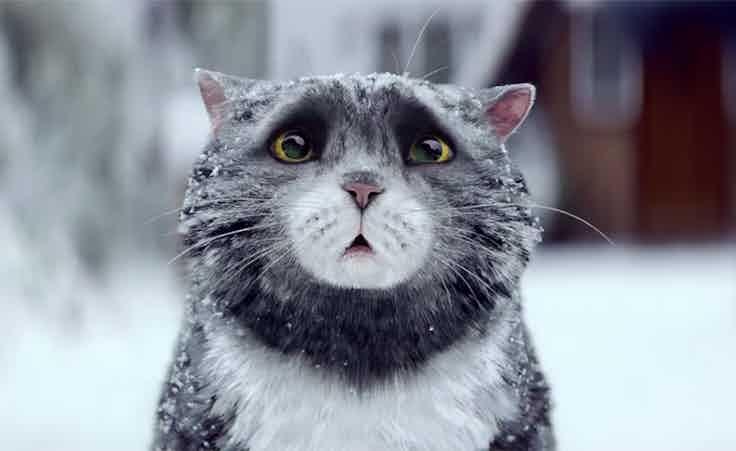 Sainsbury's cat