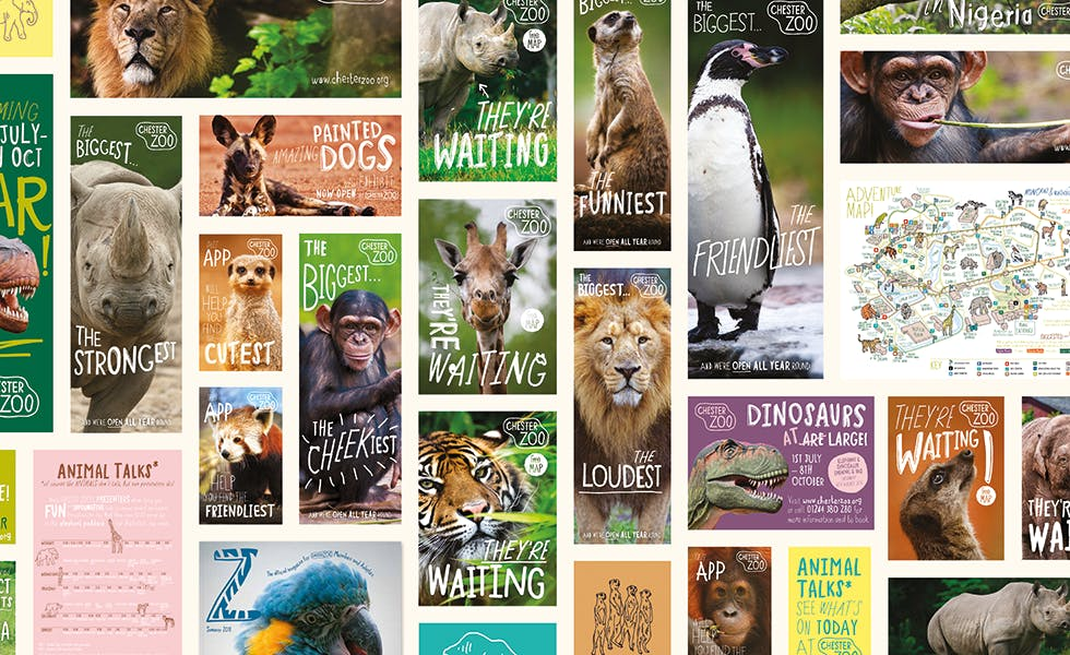 Chester Zoo brand voice