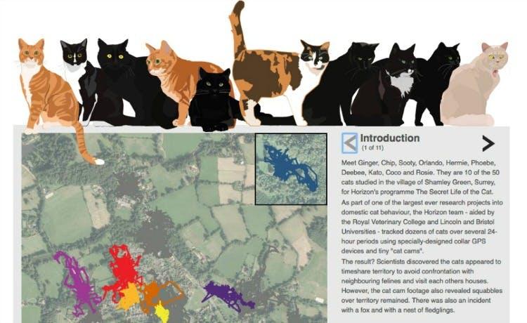 resize-bbc-cats