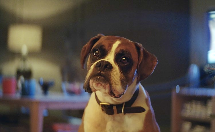 John Lewis is hoping #BustertheDog can surpass Monty The Penguin in popularity