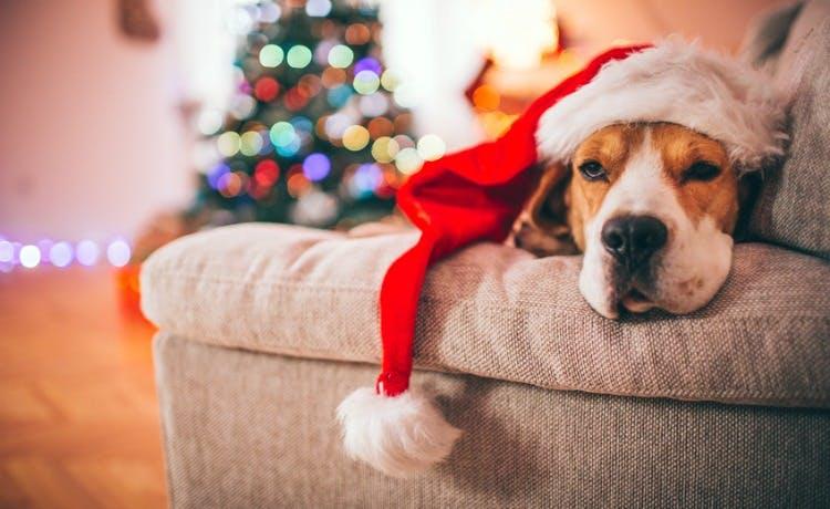 dog-xmas-blog