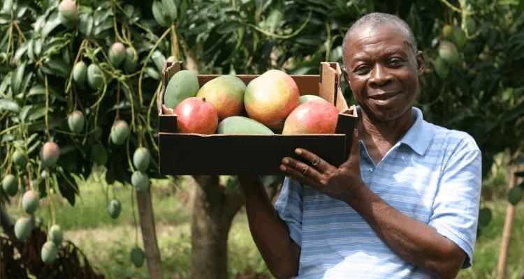 Blue Skies mango farmer