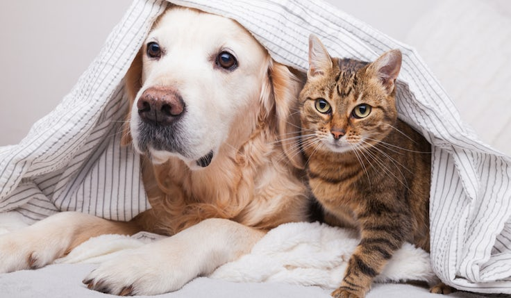 battersea dogs and cats home home